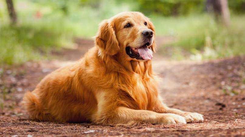 Köpekler ile İlgili Sözler